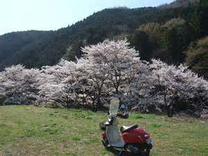春だ!!行楽シーズンだ!!今こそスクーターの免許を取ろう!!のサムネイル画像